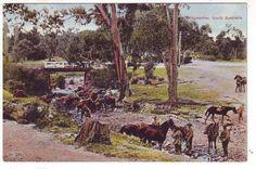 Bridgewater-Army-soldiers-training-1st-AIF-South-Australia-Sth-Aus-SA-WWI-PC