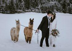 Elopement & Weddings (@blitzkneisser_foto) • Instagram-Fotos und -Videos Foto Instagram, Elope Wedding, Paradise, Tropical, Weddings, Videos, Winter, Animals, Winter Time