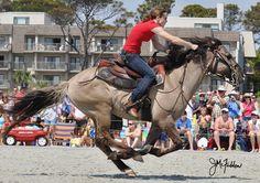 The Carolina Marsh Tacky. South Carolina State Heritage Horse. Endangered and Beautiful.