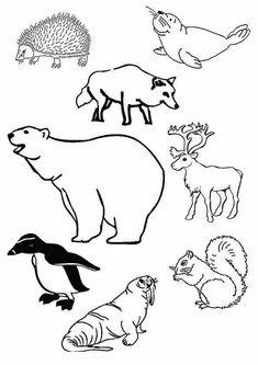 arctic animals printable coloring pages preschool