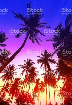 Silhuetas de palmeiras na praia tropical ao pôr do sol. foto royalty-free