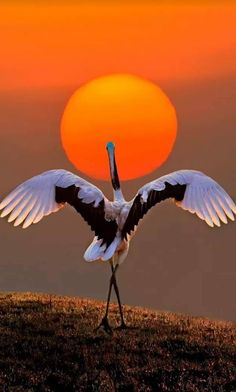 Ideas Quotes Nature Wildlife For 2019 Pretty Birds, Beautiful Birds, Animals Beautiful, Beautiful Pictures, Beautiful Sunset, Adorable Animals, Exotic Birds, Colorful Birds, Exotic Pets