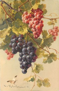 Catherine Klein Bunches of Blue Black Red Grapes on Vine Butterfly Switzerland | eBay