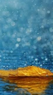 Yellow Leaf In The Rain