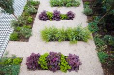 Front garden design Woodwarde Road London by Kate Eyre Garden