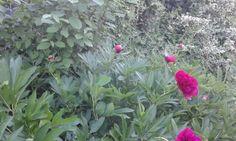 Zalai vidéki kert:-)