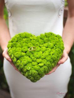 zielona chryzantema pod obrączki