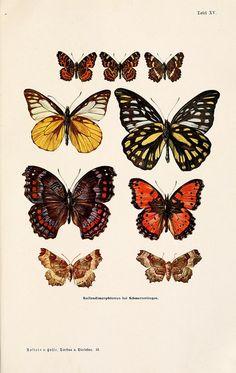 Free botanical prints! YESSS