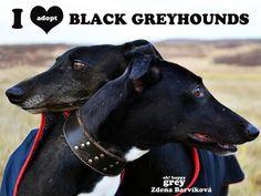 ~ Love Black Greyhounds ~