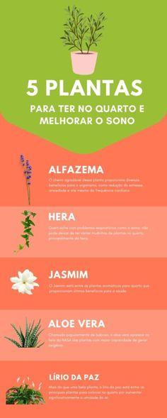 Eco Garden, Garden Plants, House Plants, Home And Garden, All About Plants, Inside Garden, Vegetable Garden Tips, Skin Care Spa, Replant