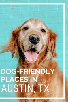 Discover all of the best dog-friendly bars, restaurants and breweries in Austin, TX. Visit Texas, Dog Friendly Hotels, Austin Tx, Dog Friends, Dog Stuff, Brewery, Best Dogs, Colorado, Restaurants