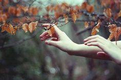 Si sta come d'autunno sugli alberi le foglie.  Giuseppe Ungaretti