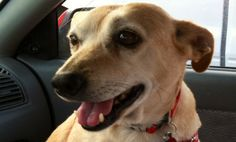 Why You May Want a Therapy Dog When You're Sick   Read more: http://www.care2.com/greenliving/why-you-may-want-a-therapy-dog-when-youre-sick.html#ixzz3AxowL2js