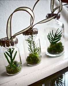terrarium ornaments...