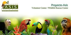 "Proyecto Asis Costa Rica... MUST do the tour + volunteer full day option...   ""help us prepare the diet for the animals, and in the afternoon, you would have to help clean the enclosures, or something else that might be required like painting, making toys for the animals, or help build a new enclosure.""  Price per person: $ 80."