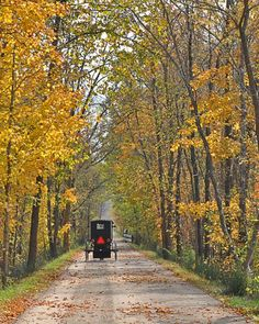 "In Ohio's Amish Country, ""shared roadway"" can mean buggies and bikes — fall is prime time for a scenic ride down the Holmes County Trail."