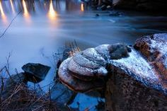 Tree stump with fungus and little snow by the small river in Helsinki, Finland
