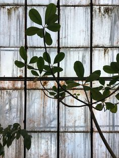 Royal Botanic Gardens Melbourne, Australia | Zhu Ohmu
