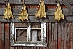 Fish for personal use drying on a shed in Røst, Lofoten, Norway