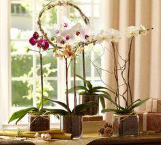 Глядя на цветущую орхидею, многие цветоводы даже не задумываются, покупать это необыкновенное растение или нет. Конечно, покупать! Вот только будет ли оно так же ...