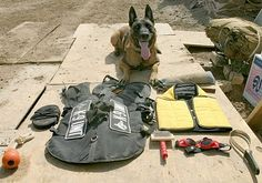 Kwinto, a military working dog with the 24th Marine Expeditionary Unit, sits beside his issued protective gear in the northern Babil province of Iraq Nov. 5, 2004. His gear includes a flak jacket, safety goggles and booties made for canines. Kwinto detects explosives at vehicle checkpoints, on security patrols and during weapon cache sweeps while deployed. (U.S. Marine Corps photo by Cpl. Sarah A. Beavers)