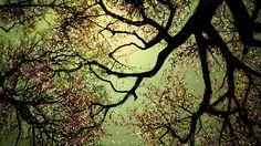 nodasanta - pick(ピック) #桜 #イラスト SAKURA picture by nodasanta 3D眼鏡で見れば立体的に見えそうな桜の絵にしてみましたが、3D画像ではありません。 友達の写真に桜の花を、お絵描きしてみました、その中で夜桜をアップします、本日野川公園に梅を見に行ってみました白梅が咲いてまして春の香りを出してました。  Travelin' Boy - Rumer http://youtu.be/krB-LRqK3Q8