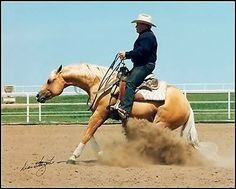 Reigning Stop Palomino, American Quarter Horse, Quarter Horses, Reining Horses, Western Riding, All The Pretty Horses, Horseback Riding, Country Life, Cattle