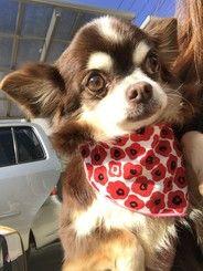 保護犬のお世話 トリミングボランティア募集 By 一般社団法人つなぐいのち Activo アクティボ 犬 動物保護 ボランティア