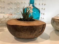 Half raw coconut shell