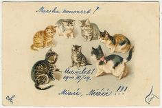 Cats, Scared Little Cat Sourrounded by Big Cats, Funny Old Postcard 1900. Helena Maguire.