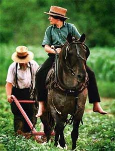Amish plow. Barefoot. Multigenerational work. Love what this picture says.