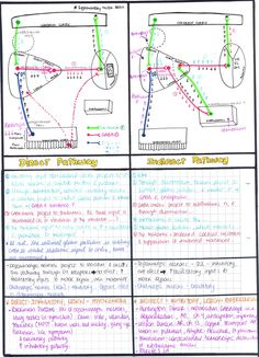 BASAL GANGLIA: DIRECT & INDIRECT PATHWAYS