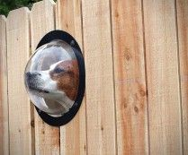 Pet Peek Fence Window for Dogs.  Hahahahaha!!!  This would be funny to see.