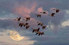 """Wild Geese That Fly With The Moon On Their Wings ~ These Are A Few of My Favorite Things..."""