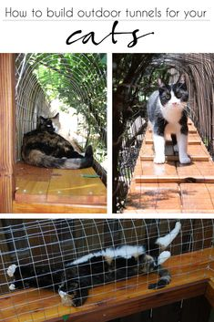 how to build a cat tunnel | how to build outdoor walkways for your cat | the best cat enclosures | catio idea | cat enclosure ideas | cat cage | cat spaces | cat walkway | #catio #catenclosure