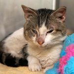 DOLBY – A1102207