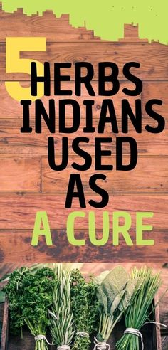 5 HERBS THE INDIANS USED AS A CURE The Cherokee Indians believed that our creator gave us everything we need. This includes the herbs that can cure any disease. They used these herbs and plants as cures for hundreds of years. Natural Health Remedies, Natural Cures, Natural Healing, Herbal Remedies, Herbs For Health, Health And Wellness, Health Tips, Health Recipes, Wellness Tips