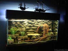 fish tank ideas   Fish Tank of May '11 at The Age of Aquariums - Tropical Fish