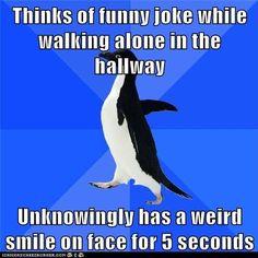 socially awkward penguin - Google Search