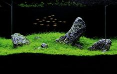 Iwagumi-style aquascapes make the stones the aquarium's focal point.  Small grasses and mosses are used instead of stemmed plants.  Tanks are usually stocked with small, schooling fish like tetras or danios.  The balance and visual appeal of Iwagumi tanks is breathtaking.