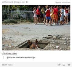 Tumblr at its most hilarious.