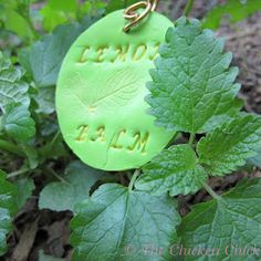 DIY Garden Markers using Polymer Clay Plant Markers, Garden Markers, Outdoor Garden Decor, Outdoor Gardens, Unique Gardens, Beautiful Gardens, Herb Labels, Herb Wall, Garden Projects