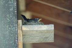 Build a Nesting Shelf