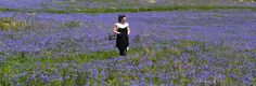 Bluebell Field on Dartmoor.   That's me.
