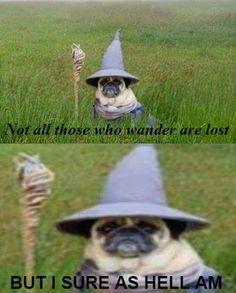 40+ Dank Lord Of The Rings Memes