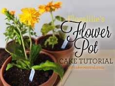 Incredibly realistic and sure to impress gardeners and cake lovers alike, this flower pot cake tutorial offers clear, step-by-step...