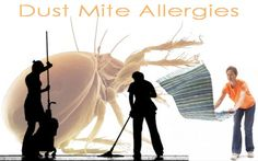 Dust Mite Control – Allergies and Prevention!