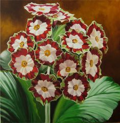 "georgina johnstone ""Auricula""..these would be so pretty in a Christmas arrangement."