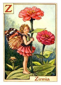 Zinnia Fairy from the Flower Fairy Alphabet by Cicely Mary Barker ❤❦♪♫