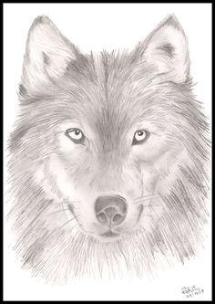#dog_lover Anime Sketch, Dog Lovers, Husky, Dogs, Animals, Animales, Animaux, Animal Memes, Husky Dog
